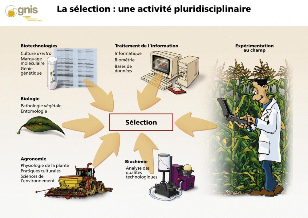 Sélection variétale : activité plurodisciplinaire